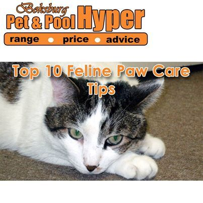 Cats need healthy feet to scratch, climb and achieve their famed acrobatic landings. That's why it's important to regularly examine and clean your cat's paws and make sure they're wound-free - Here is Top 10 Feline Paw Care Tips: http://on.fb.me/1dKQ7cL #catcare #caretips