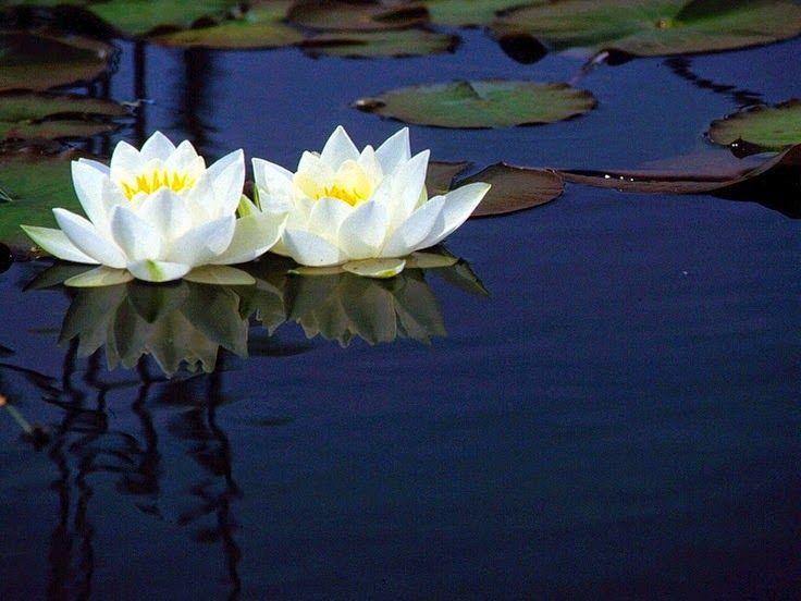 EstudiandoEspiritualidad: La meditación y el aprecio de la belleza.