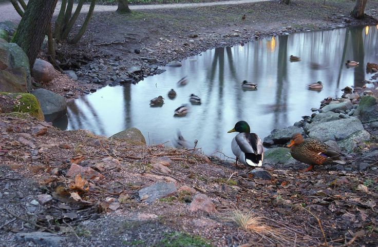 check it out http://earth66.com/exposure/ducks-helsinki-finland/
