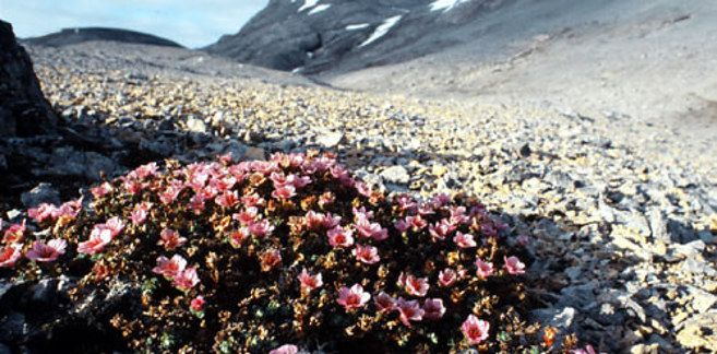 Bear Island/Bjørnøya (Norway) | The 13 Most Remote Islands In The World