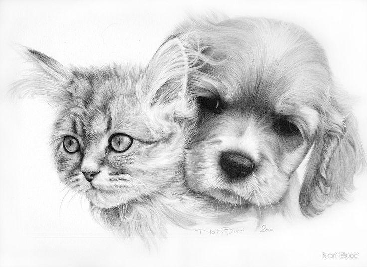 Про котов, картинки с кошкой и собакой для срисовки