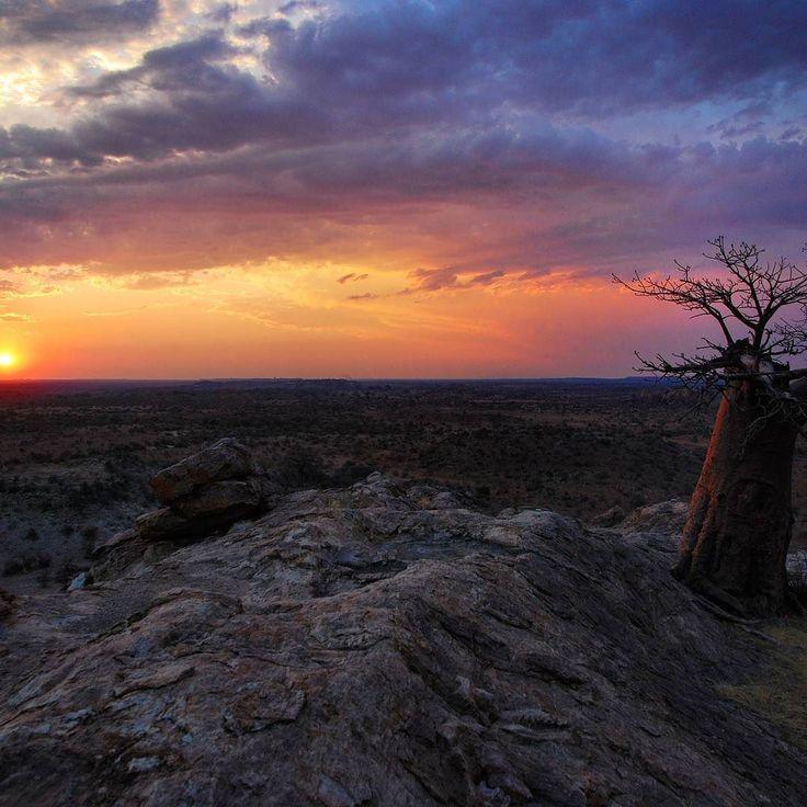 #natucate #wilderness #botswana #wildernessexperience #fgasa #wanderlust #homeiswhereyourheartis #really? #safari #walkingsafari #onceinalifetime #amazing #reisen #afrika #travel #TravelAfrica #Mashatu #mashatugamereserve #africa #botswana #nature #naturelovers #landscape #explore by natucate @enthuseafrika