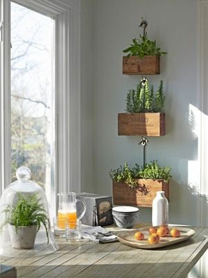 Cute idea for a kitchen herb garden