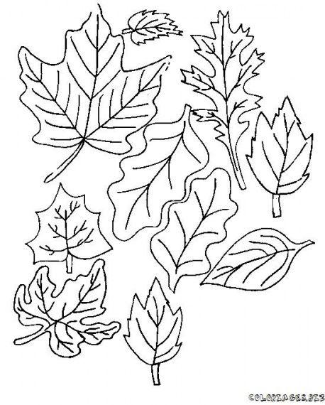 Hoja De Arbol Para Colorear. Plantillas Para Imprimir Plantas ...