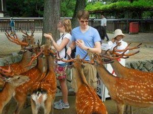 Curtir Espetacular: Nara, a cidade dos cervos