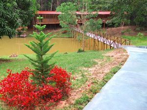 The Hummingbird Ayahuasca Retreat and Healing Center is a shamanic healing center specializing in plant spirit medicines and energetic healing. Located near Iquitos, Peru on 35 acres of beautiful and tranquil rainforest, the center provides an idylic environment for healing and personal transformation. The Hummingbird Center offers a unique approach to the ayahuasca healing and read more