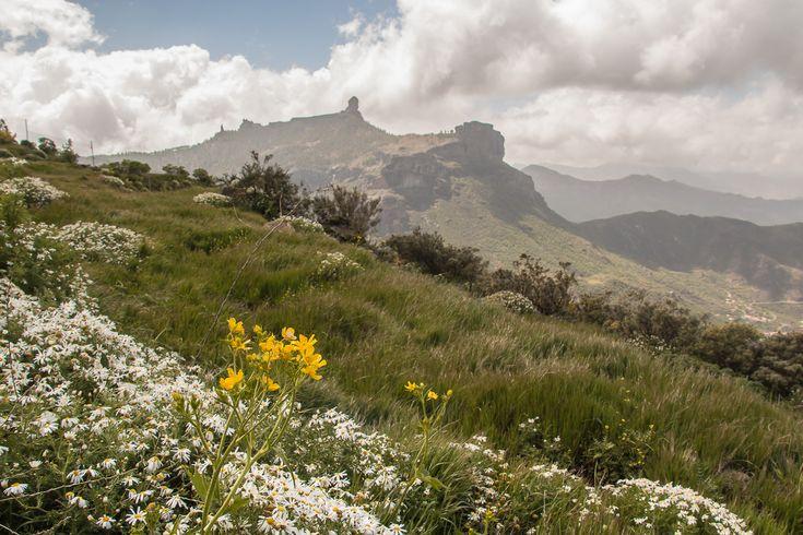 Primavera 2017 en Gran Canaria Mirador Degollada Becerra Tejeda (20/03/2017) Toca o desplaza la foto para ver toda la galería Ya luce la primavera en todo su esplendor en la cumbre de Gran Canaria,…