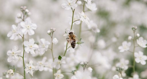 Tui Garden | Bring bees to your backyard