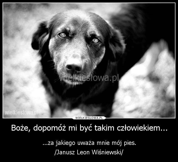 Boże, dopomóż mi być takim człowiekiem... #Wiśniewski-Janusz-Leon,  #Człowiek, #Psy