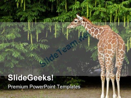 Les 119 meilleures images du tableau africa powerpoint templates giraffe animals powerpoint templates and powerpoint backgrounds 0211 powerpoint templates themes background toneelgroepblik Images