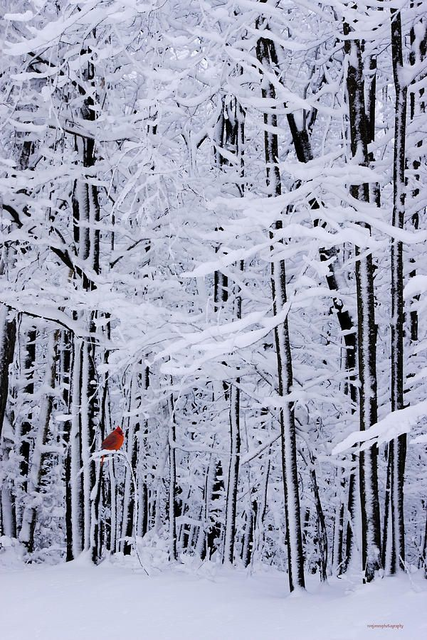 ✯ Winter