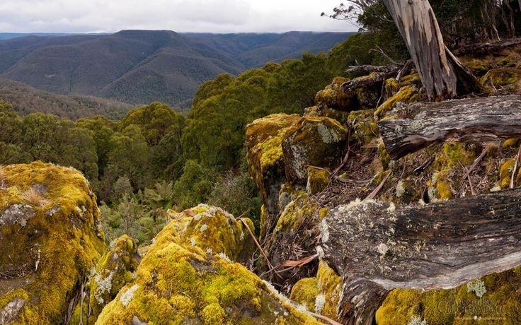 Images of Australia: Barrington Tops National Park, New South Wales