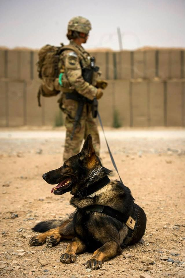 U.S. Air Force Staff Sgt. Jessie Johnson, 3rd Infantry Division military working dog handler, and her dog, Chrach, at FOB Pasab, Afghanistan.