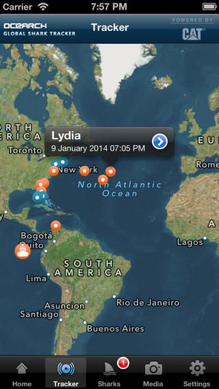 Want to track sharks in near real time? Download the free Global Shark Tracker app.