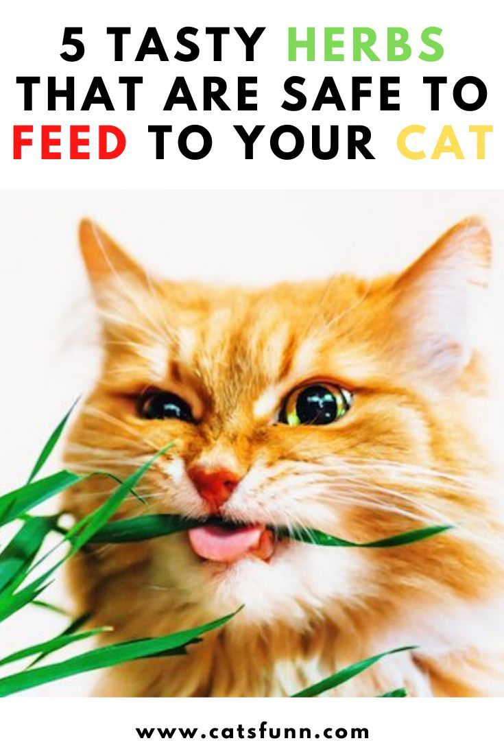 Tasty Herbs That Are Safe To Feed To Your Cat Cats Cat Catlover Catlovers Kitty Meow Kitten Pets Kittens World Ca Cat Health Funny Cats Cat Behavior