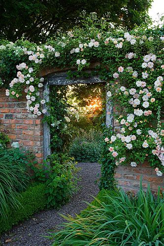 Wollerton old hall, shropshire. Rosa 'phyllis bide' over doorway from long walk into croft garden. Entrance. Vista  www.clivenichols.com