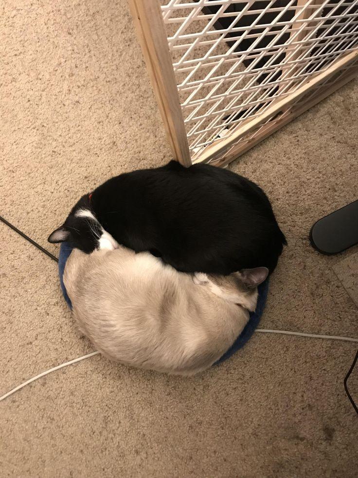 Ying-Yang Cat Bros http://ift.tt/2Ew5wTK