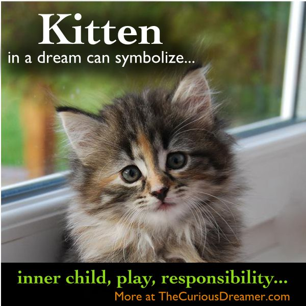 108 Best Dreams Images On Pinterest So True Thoughts And Capricorn