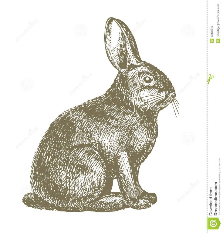 Line Drawing Rabbit : Best images about rabbit on pinterest easter