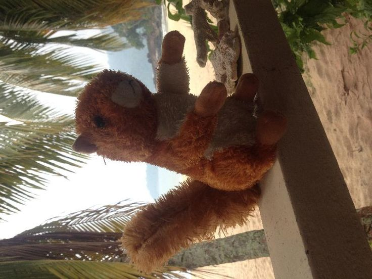 Found on 25 Aug. 2015 @ Tioman Ferry - mersing to Tioman. We found a cuddly squirrel on the Ferry from Mersing to Tioman Island today. We saw the little boy with the toy earlier, but we noticed to late that he had left it on the boat. We can drop the cudd... Visit: https://whiteboomerang.com/lostteddy/msg/62miw0 (Posted by Else on 25 Aug. 2015)