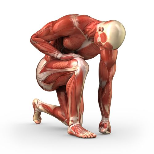 he knee is the largest joint in the body and acts as the link between the upper and lower leg enabling you to transfer power from the big powerful muscles in the hips and butt, down though your foot to Terra Firma. This translates into the force vector that propels us up and down mountains …