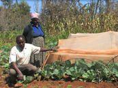 Maraîchage : des filets anti-insectes pour éviter l'usage de pesticides