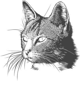 Kot, Kotek, Głowy, Zwierzę, Matou