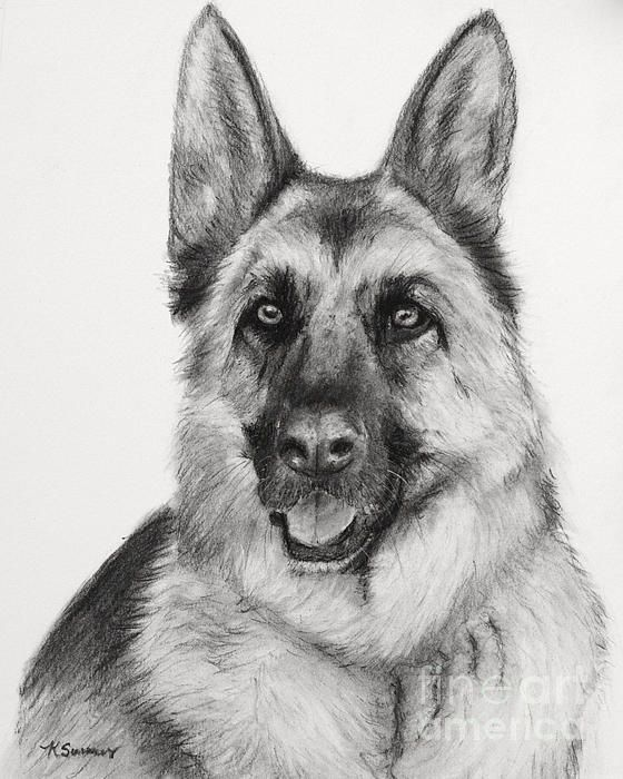 German Shepherd Drawn in Charcoal Drawing | Pet Art ...