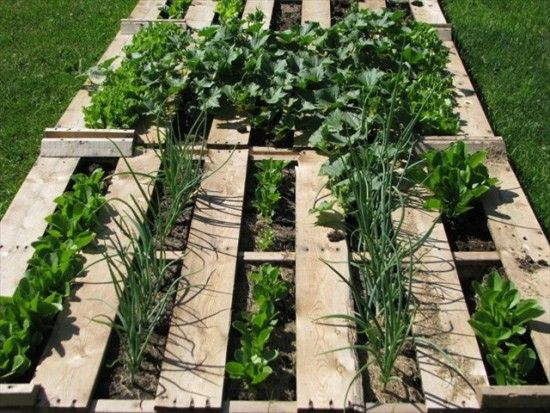 Wooden pallet vegetable garden