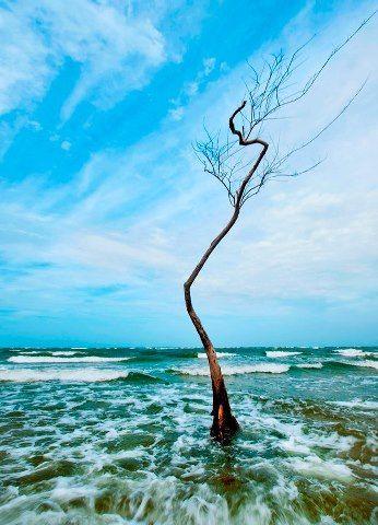 Ilha de Marajo,  Pará - (by Bala Blauth)