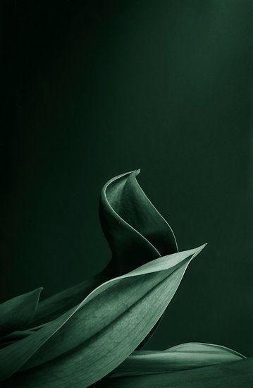 Dunkles Flaschengrün (Farbpassnummer 7) Kerstin Tomancok / Farb-, Typ-, Stil…