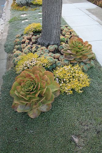 Replace your water- thirsty curbside lawn strip with this amazing low water use alternative of Dymondia, grey ground-cover, and mixed succulents.