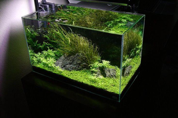 581 best fish tanks images on pinterest aquascaping - Petit aquarium design ...
