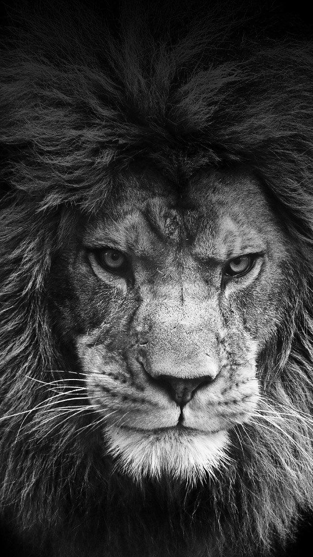 freeios7.com_apple_wallpaper_legendary-lion_iphone5.jpg 640×1,136 pixels