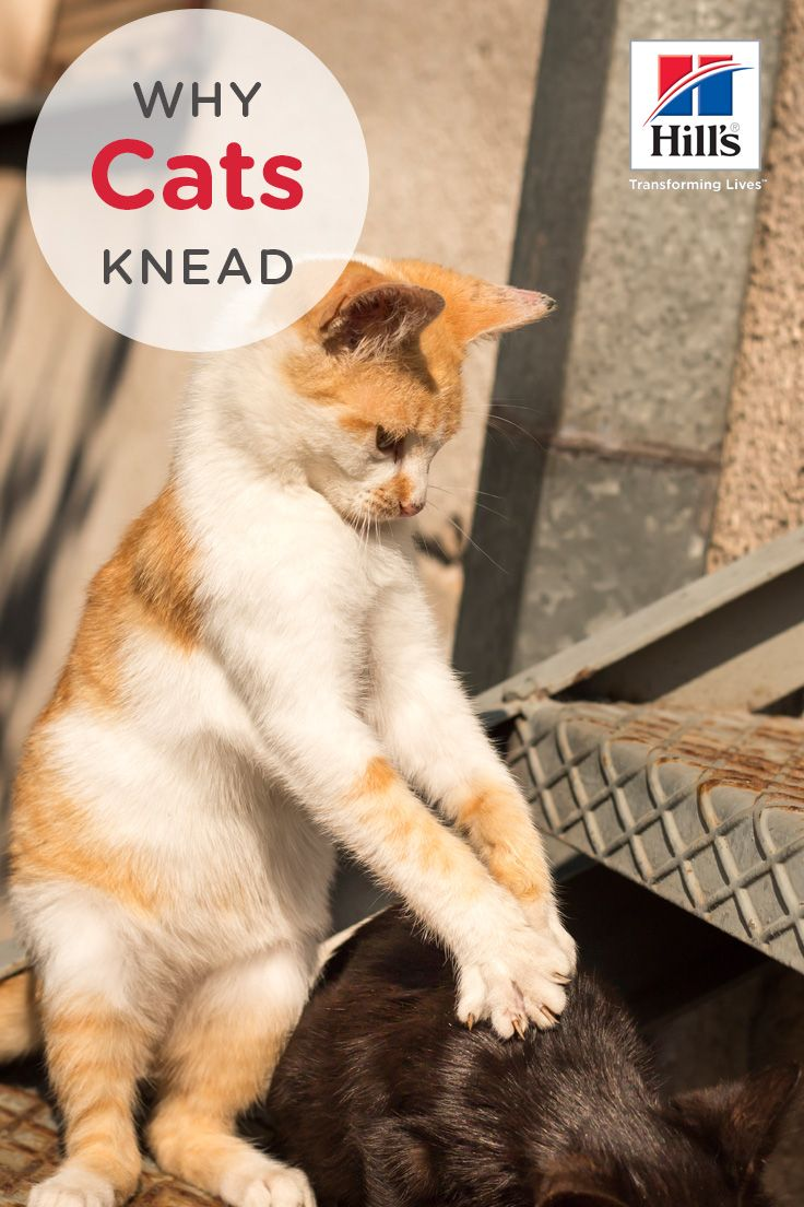 Weird Things Cats Do Why We Love Them Cats Knead Cats Cat Behavior