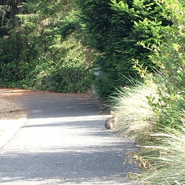 【rosejamlushie】さんのInstagramをピンしています。 《#bunny #rabbit #deceptionpassbridge #statepark #WA #logs #camping #summer #trees #woods #bluesky #pnw #sky #sun #clouds  #うさぎ #ディセプションパス州立公園 #橋 #キャンプ #夏 #2016 #ワシントン州 #青空 #森林浴 #森林 #雲 #空 #太陽 #太平洋岸北西部》