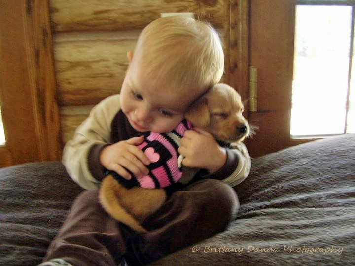 A boy and his Golden Labrador puppy. Oh my gosh so much cuteness in one picture!! :D