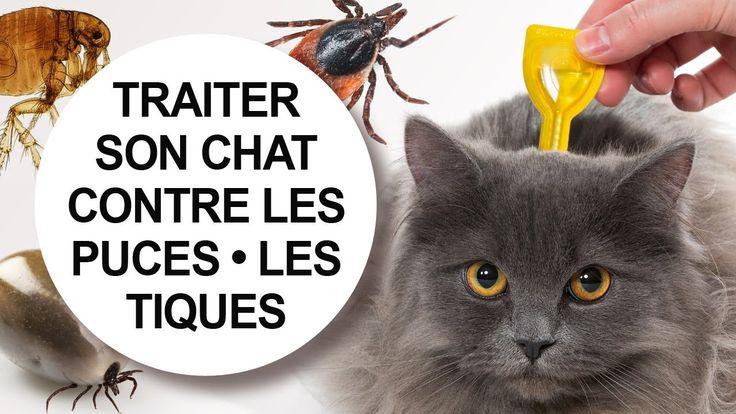 Tutoriel vidéo vétérinaire : comment traiter son chat contre les puces et les tiques. #traitement #parasite #anti-parasitaire #conseil #vétérinaire #débarasser #éliminer #piqure #conseil #traiter #pipette #infestation #crotte #collier