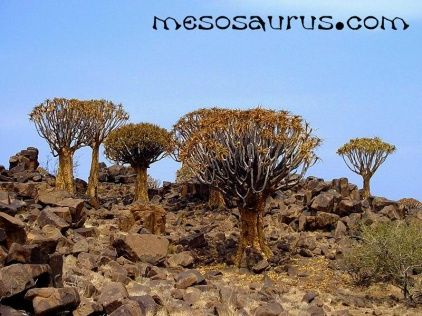 #Keetmanshoop, #Namibia – #Mesosaurus Fossil Site & Quiver Tree Dolerite Park 38kms north east of Keetmanshoop #Travel back in time to through the fossil site or take a stroll through the quiver tree forest that is home to over 5000 specimens. The accommodation options range from en-suite chalets to a bush camp in an isolated valley. Enjoy the solitude on #safari