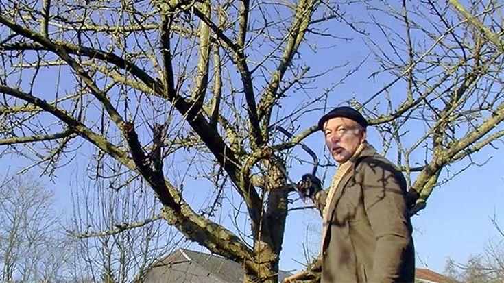 La taille du pommier vous permettra d'avoir une belle fructification. Tous les bons gestes en images avec Hubert le jardinier.
