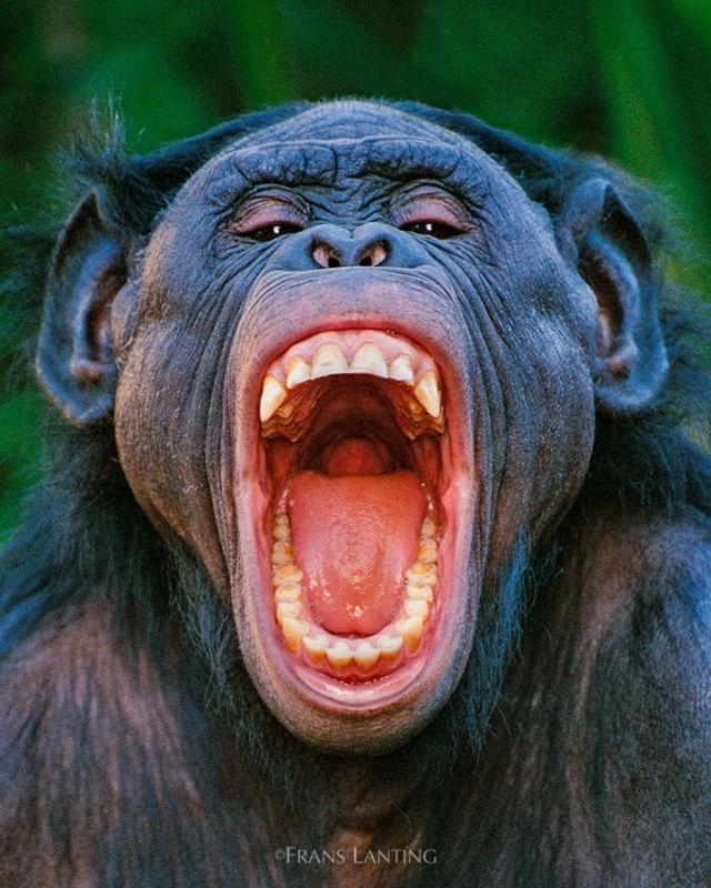 25 best Animal Roar images on Pinterest | Wild animals ...