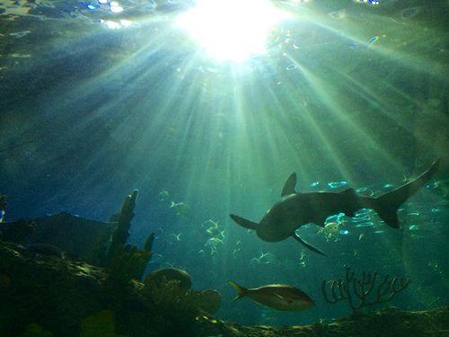 Aquarium - Apr 2014