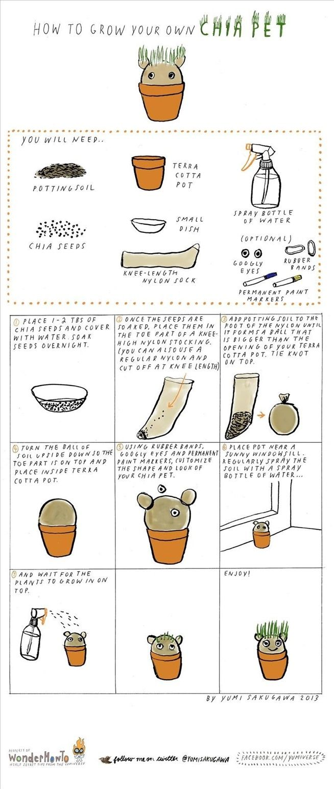 How to Make & Grow Your Own Chia Pet « The Secret Yumiverse