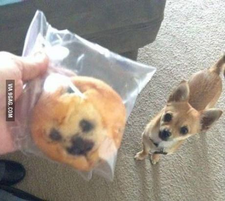 Is it wrong to eat a Blueberry Muffin that looks just like your dog?