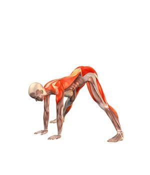 ૐ YOGA ૐ Prasarita Padottasana ૐ Amplitud de Piernas. Flexión hacia adelante. Wide legged forward bend | YOGA.com