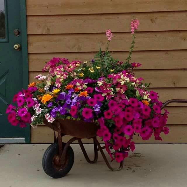 Wheelbarrows and wagons make wonderful container gardens. Drill holes for drainage, if it isn't full of holes already!