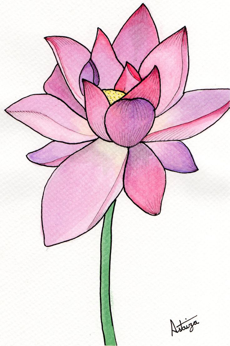 Water lily - Watercolor