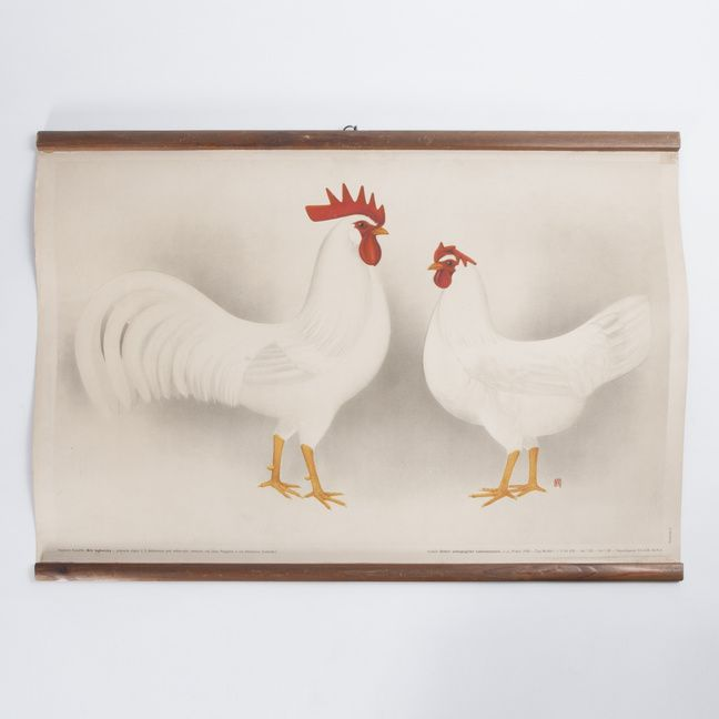 """Educational poster chicken breed. Breed """"Bíle longhornky"""". Paper poster with wooden lats. Poster at several places slightly damaged."""