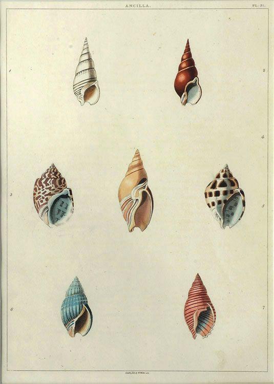 The Antiquarium - Antique Print & Map Gallery - George Perry - Ancilla, Plt. 31 - Hand-coloured aquatint