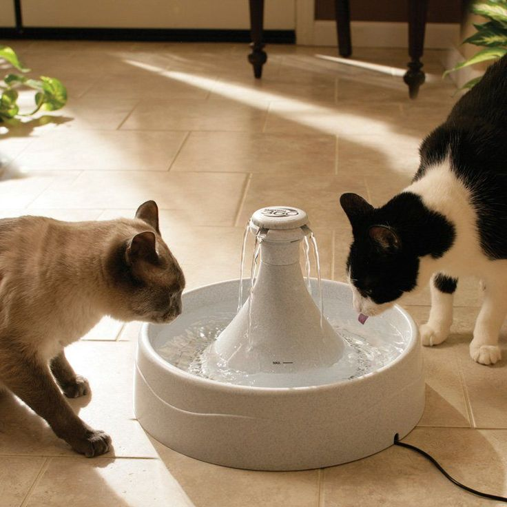 Have to have it. PetSafe Drinkwell 360 Pet Water Fountain - 1 Gallon - $57.99 @hayneedle